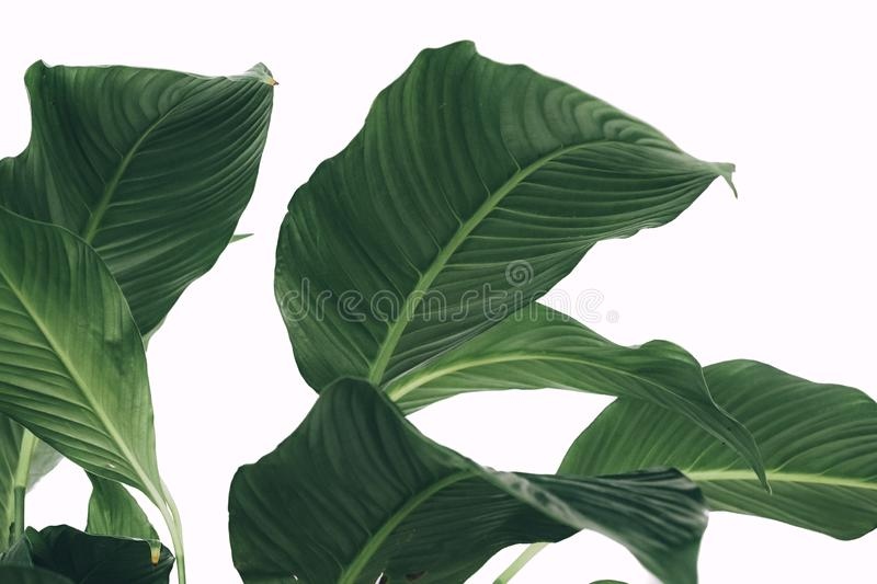 Beautiful shot of exotic tropical leaves royalty free stock images