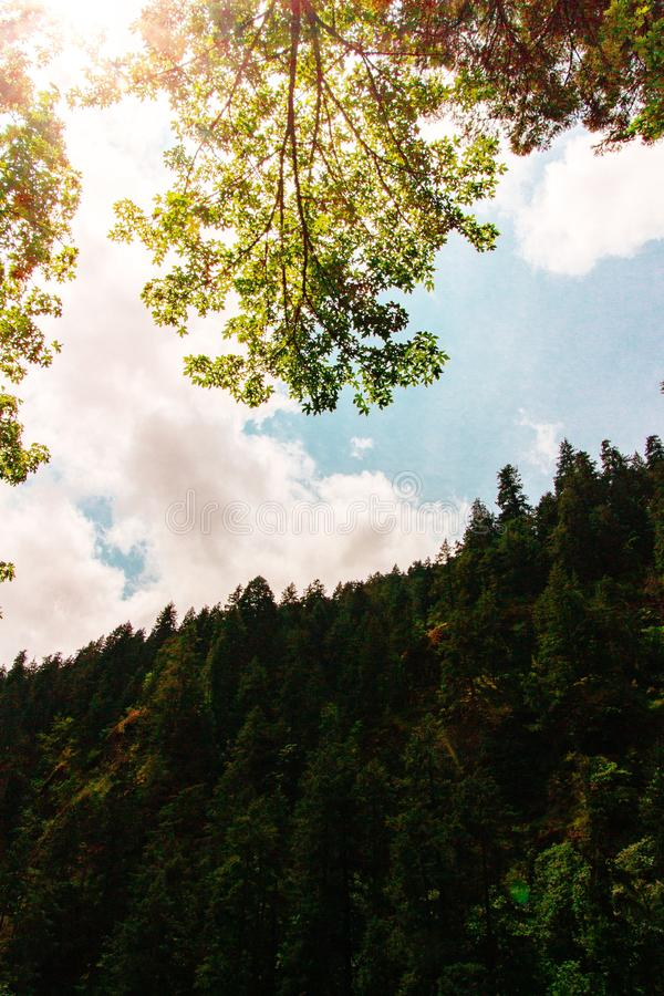 Beautiful shot of a forest on a steep hill with the sunlight shining through leaves and branches royalty free stock images