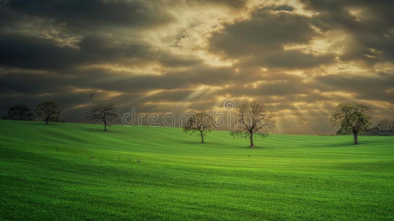 Beautiful shot of a green grass field with some bare trees under dark clouds at sunrise (sunset. A beautiful shot of a green grass field with some bare trees royalty free stock images
