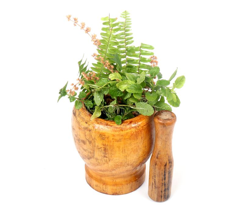 Green herbs. Beautiful shot of green herbs on white background stock images