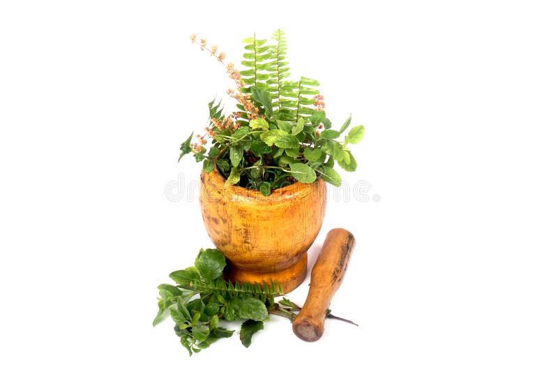 Green herbs. Beautiful shot of green herbs on white background stock photo