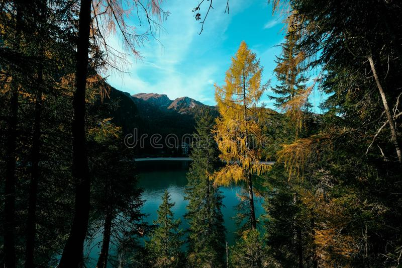 Beautiful shot of green and yellow trees near the water with mountain and blue sky in background. A beautiful shot of green and yellow trees near the water with royalty free stock image