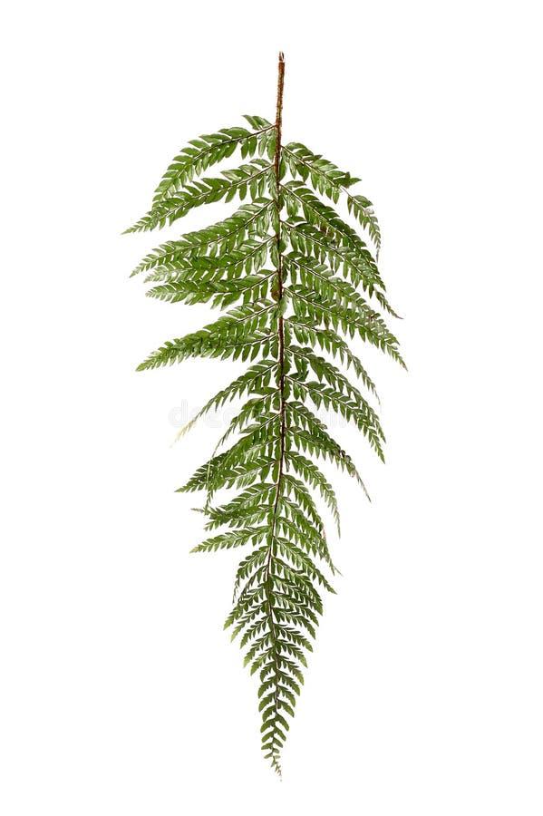 Jungle fern stock photo