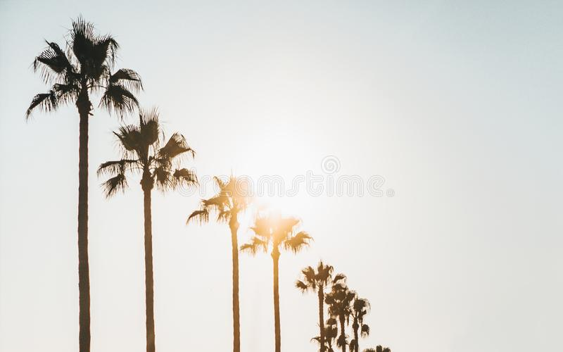 Beautiful shot of palm trees with a white sky in the background and the sun shining through leafs. A beautiful shot of palm trees with a white sky in the stock image