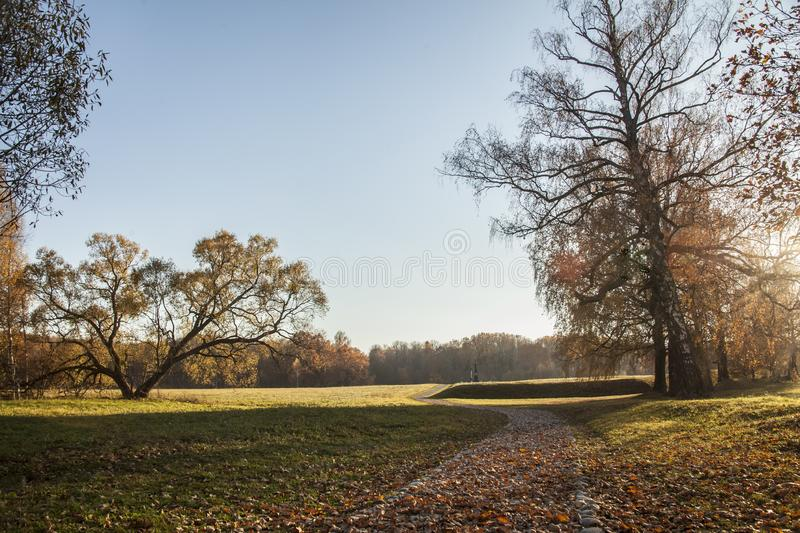 Beautiful shot of a pathway in the middle of the grassy field covered in brown leaves near trees stock photos