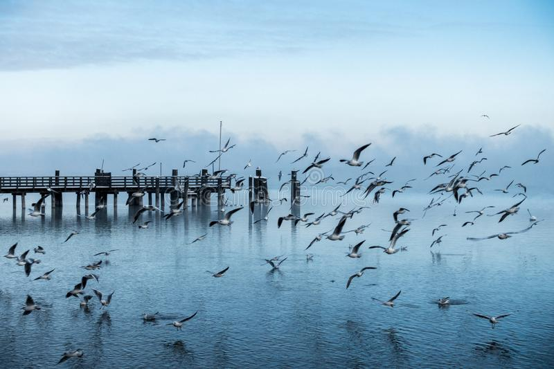 Beautiful shot of a pier at the coast of the sea with a large colony of seagulls flying by stock images