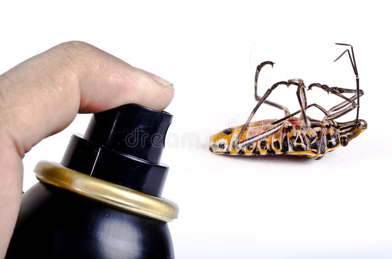 Killing the cockroach, pest control stock photo