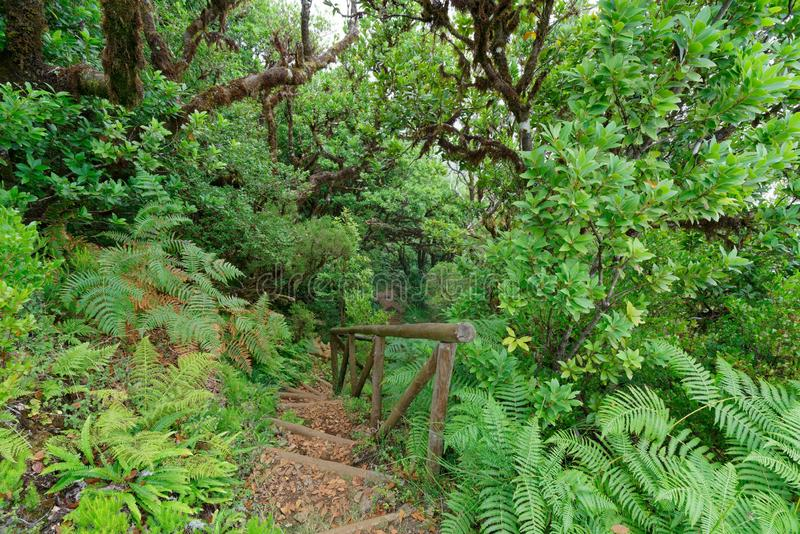 Beautiful shot of stairs in the woods surrounded by trees and plants stock photography