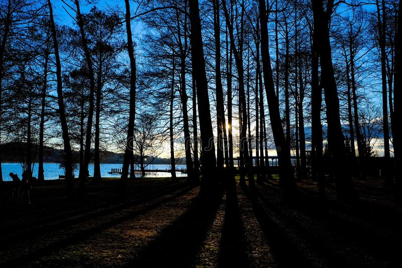 Beautiful shot of tall trees and the sun through the branches near the sea. A beautiful shot of tall trees and the sun through the branches near the sea royalty free stock images