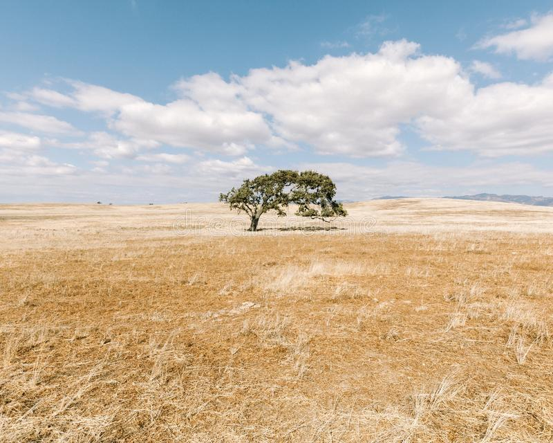 Beautiful shot of a tree in a dry grassy field under a blue cloudy sky at daytime. A beautiful shot of a tree in a dry grassy field under a blue cloudy sky at royalty free stock images