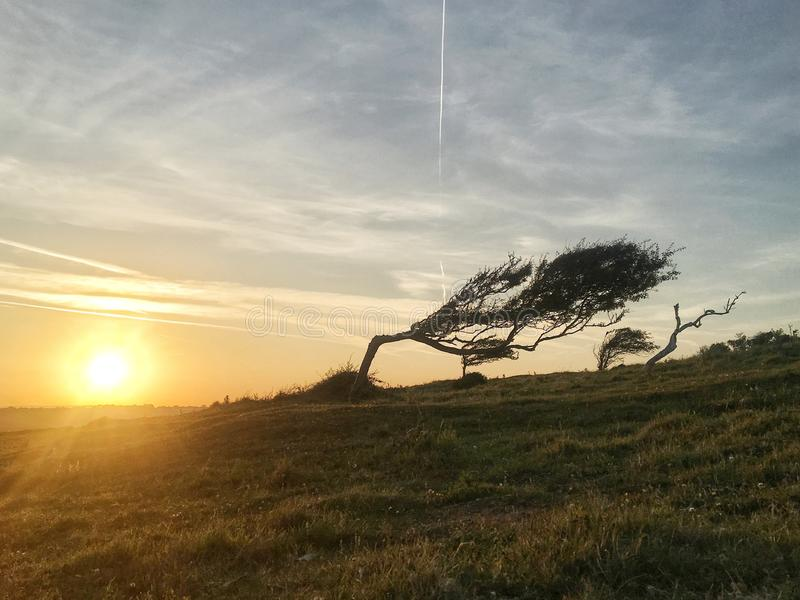 A beautiful shot of a tree getting bent by strong wind stock photo
