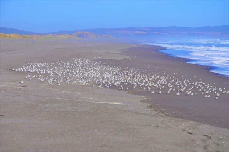 Beautiful shot of a waterbird flock on the beach near the beautiful sea waves 免版税图库摄影