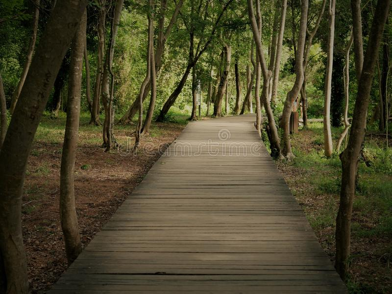 Beautiful shot of a wooden pathway in the middle of a forest with green leaf trees. A beautiful shot of a wooden pathway in the middle of a forest with green stock photography