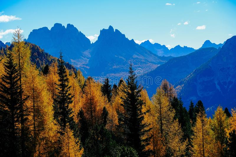 Beautiful shot of yellow and green trees with mountains and blue sky in the background. A beautiful shot of yellow and green trees with mountains and blue sky in royalty free stock images
