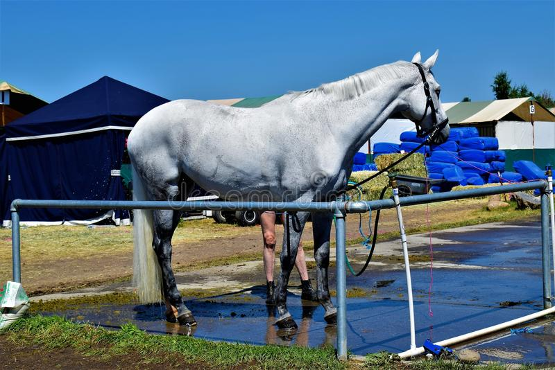 Beautiful show jumper stock images
