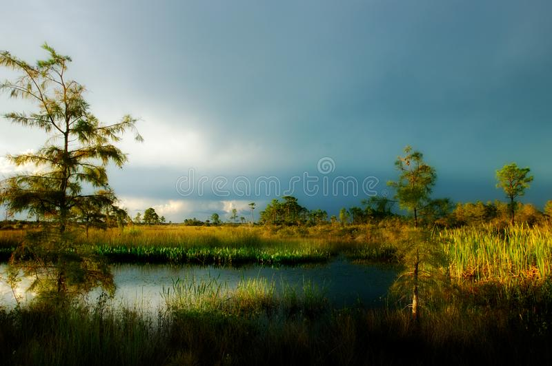 Beautiful side lighting over a pond in Big Cypress Preserve, Flo. Beautiful side lighting through afternoon storm clouds lights up marshes and cypress along a royalty free stock photos