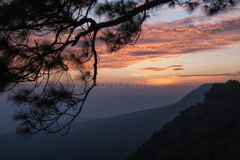 Beautiful silhouette branch on twilight sunset. Beautiful branch silhouette on twilight sunset and mountain background stock photo