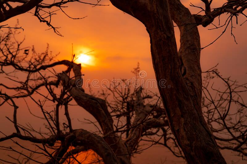 Beautiful silhouette leafless tree and sunset sky. Romantic and peaceful scene of sun, and golden sky at sunset time with beauty. Pattern of branches. Beauty in stock image