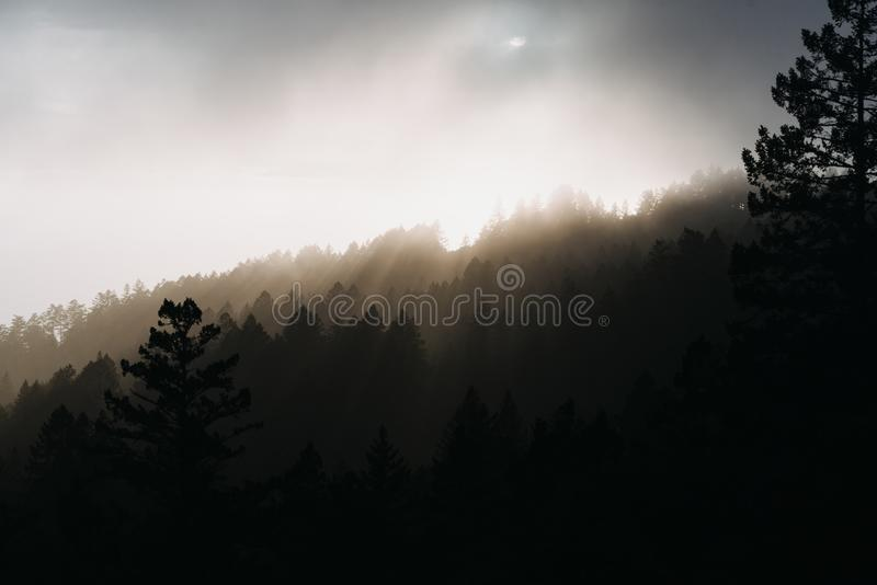 Beautiful silhouette shot of trees covered in sun rays. A beautiful silhouette shot of trees covered in sun rays stock photo