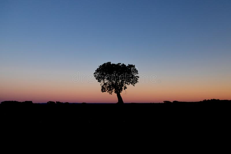 A beautiful silhouette of a tree royalty free stock photography