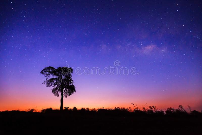 Beautiful Silhouette of Tree and Milky Way stock images