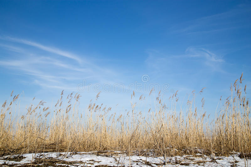 Beautiful sky background in winter steppe stock images