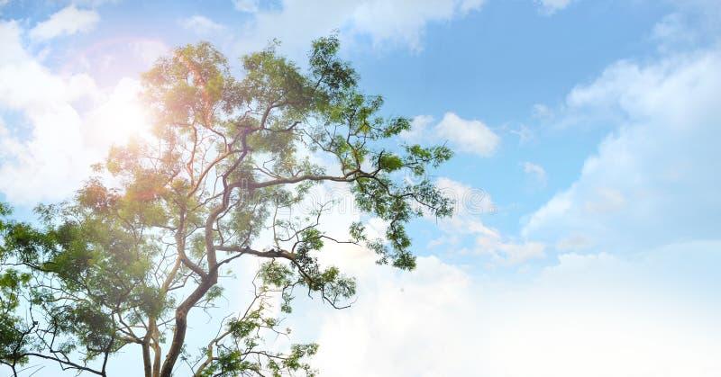 Beautiful sky on big tree royalty free stock photography