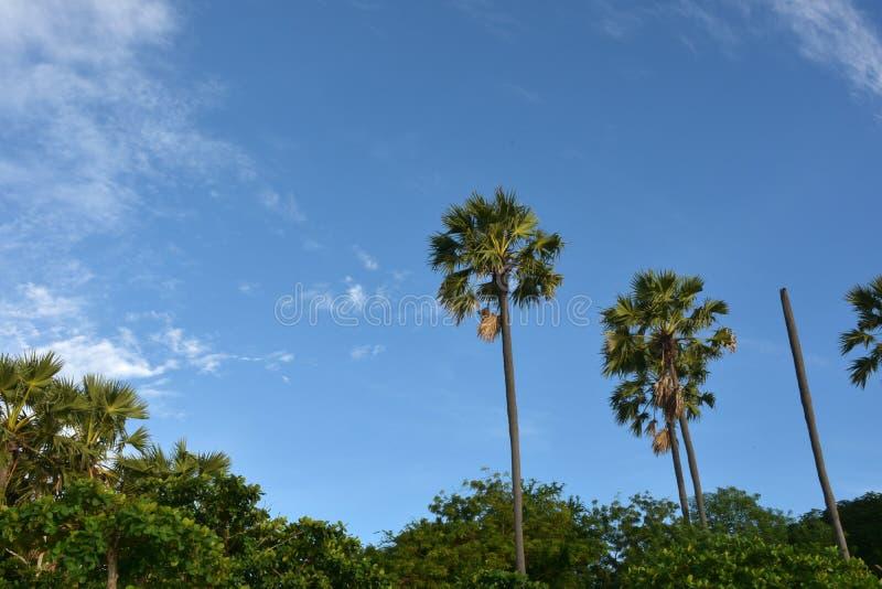 Beautiful sky. stock image