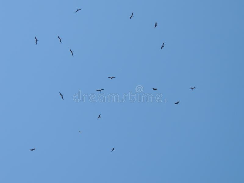A beautiful sky with a lot of birds. A beautiful picture of a blue sky with a lot of birds stock image