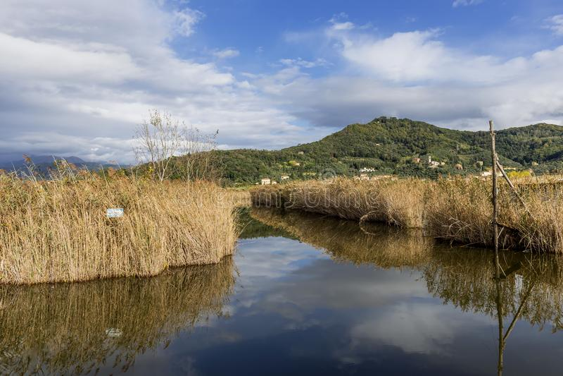 A beautiful sky is reflected in Lake Massaciuccoli, Lucca, Italy royalty free stock photo
