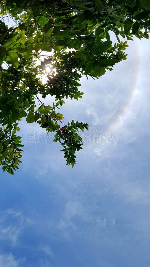 Beautiful sky with sun halo ring see through tree royalty free stock photos