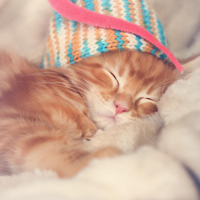 Beautiful sleeping red solid maine coon kittens covered in warm. Blanket and colorful hat. Soft light tender portrait. Closeup stock photography