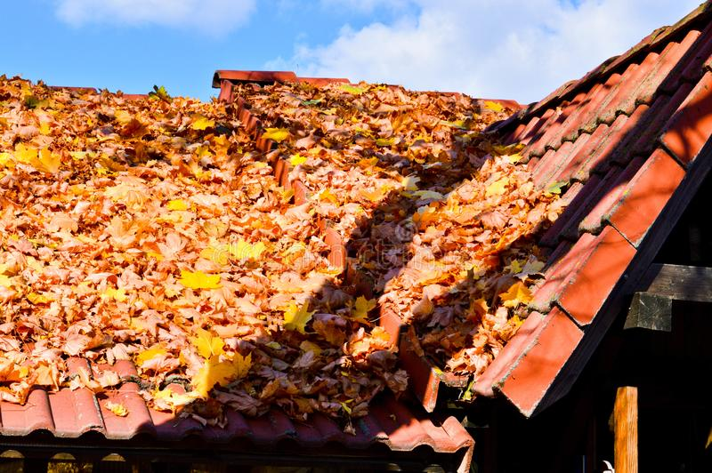 Beautiful sloping sloping tregolnaya roof of the house of red tiles covered with a layer of autumn yellow fallen leaves. The background royalty free stock images