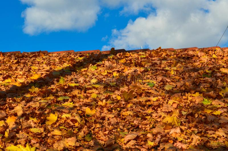 Beautiful sloping sloping tregolnaya roof of the house of red tiles covered with a layer of autumn yellow fallen leaves. The background royalty free stock photos