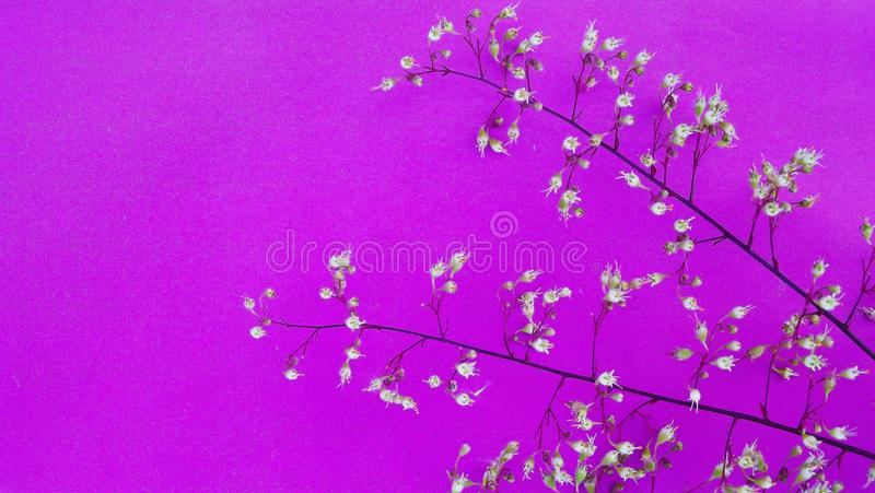 Beautiful small flowers. Beautiful small flowers on pink background stock photos