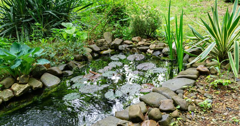 Beautiful small garden pond with stone shores and many decorative evergreens spring after rain stock photography