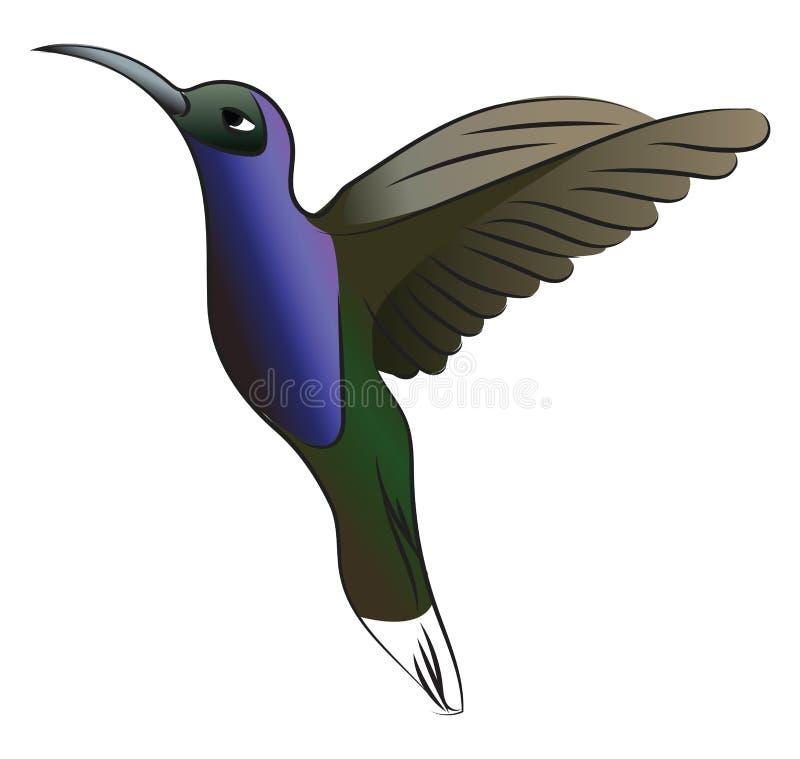 Green & blue hummingbird vector or color illustration stock illustration