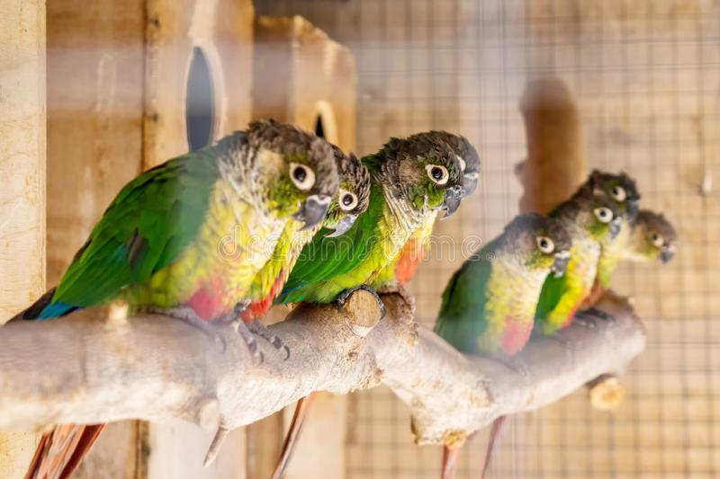Parrots in a cage stock photography
