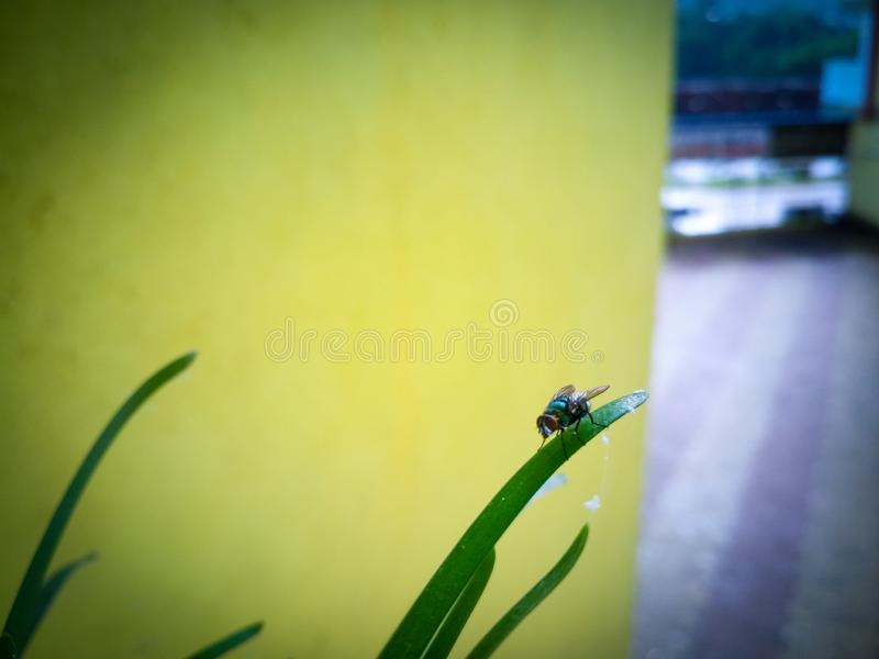 Beautiful small insect on the grass. Looking so cute royalty free stock photography