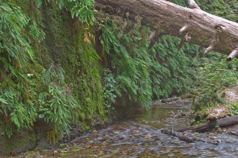 Beautiful small stream stock photos