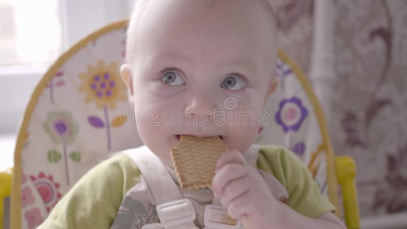 Beautiful small toddler boy at the table take a cookie in his hand, eating it and watching into the camera close up view royalty free stock photography