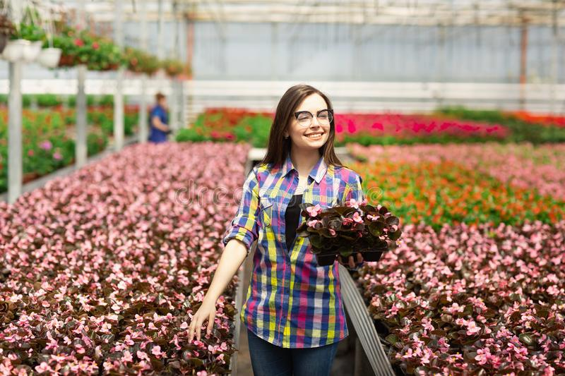 Beautiful smiling girl in glasses, worker with flowers in greenhouse. Girl holds flowers of begonias.  royalty free stock images