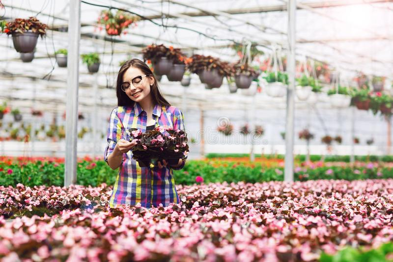 Beautiful smiling girl in glasses, worker with flowers in greenhouse. Girl holds flowers of begonias.  royalty free stock photos