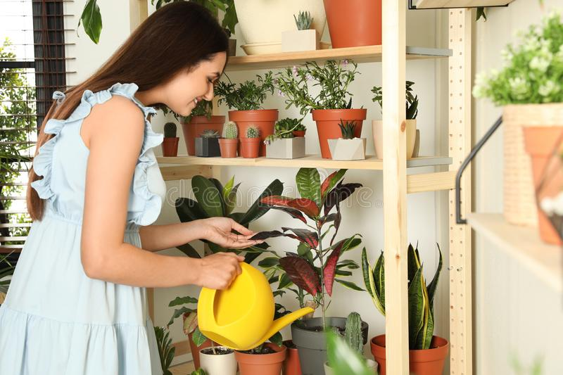 Beautiful smiling young woman watering indoor plants near wall stock photo