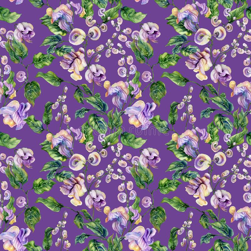 Beautiful snail vine twigs with bright flowers on purple background. Seamless floral pattern. Watercolor painting. Hand painted royalty free illustration