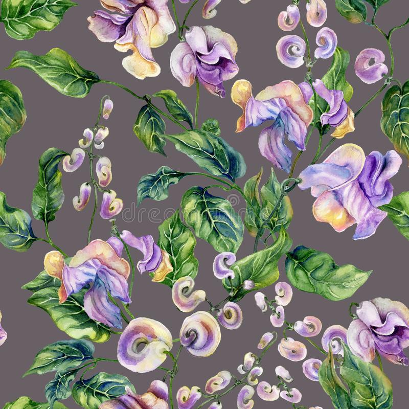 Beautiful snail vine twigs with purple flowers on gray background. Seamless floral pattern. Watercolor painting. vector illustration
