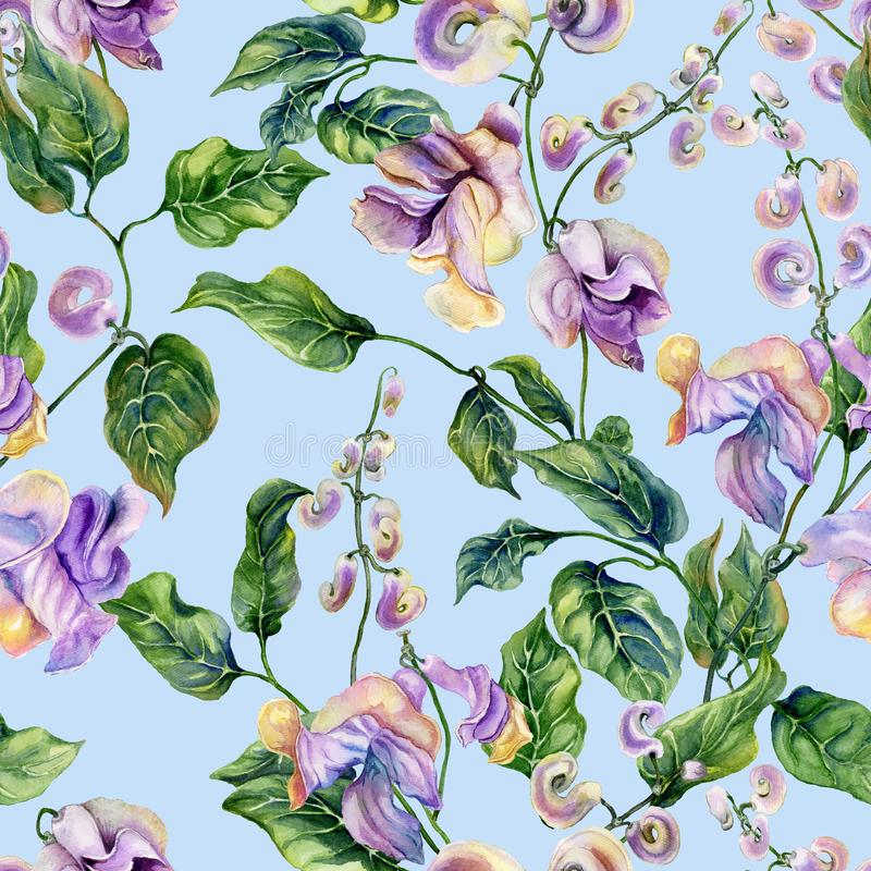 Beautiful snail vine twigs with purple flowers on light blue background. Seamless floral pattern. Watercolor painting. royalty free illustration