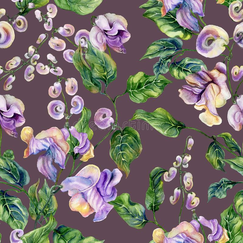 Beautiful snail vine twigs with purple flowers on plum color background. Seamless floral pattern. Watercolor painting. vector illustration
