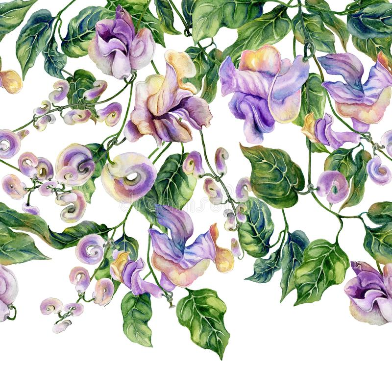 Beautiful snail vine twigs with purple flowers on white background. Seamless floral pattern, border. Watercolor painting. vector illustration