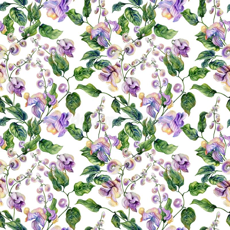 Beautiful snail vine twigs with purple flowers on white background. Seamless floral pattern. Watercolor painting. Hand painted vector illustration